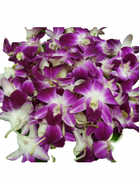 Orchid Loose Flowers