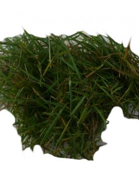 Arugampul Loose Grass (Carpet Grass)